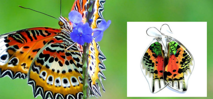 Real Butterfly Wing Jewelry…how in the world do they get the wings???? I'll tell you
